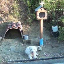 """Cão fiel """"Hachiko grego"""" não sai do local onde o seu tutor morreu"""