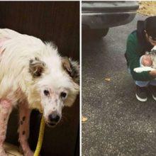 Cão foi resgatado e salvo, ele não consegue parar de acariciar seu novo pai