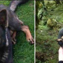 Cão perdido não conseguiu conter sua alegria quando reencontrou com o seu humano
