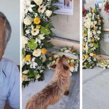Cãozinho sai sozinho todos os dias para visitar o túmulo de seu melhor amigo