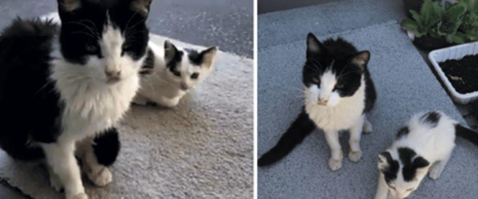 Casal gentil alimentou um gato perdido, e então ela voltou com seu gatinho fofo
