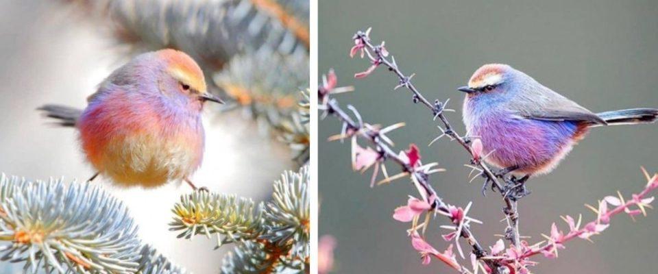 Conheça o toutinegra-de-sobrancelha branca, o pássaro com uma bela coloração em arco-íris (fotos)