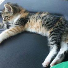 Depois que o motorista do caminhão encontra o gatinho perdido na estrada, ela adormece e ele não tem coragem de acordá-la