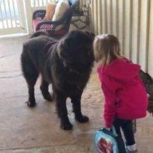 Garotinha dá tchau ao cachorro todas as manhãs antes de ir para a escola