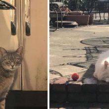 Gato com o coração partido visita seu vizinho todos os dias em busca de um amigo especial que foi embora para sempre