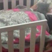 Mamãe acha que seu cachorro está perdido até encontrá-lo dormindo ao lado de seu filho