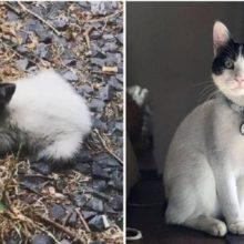 Pequeno gatinho abandonado se aproxima de uma mulher e pede ajuda a ela
