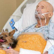 Veterano de Guerra do Vietnã tem o último desejo de se reunir com seu cachorro