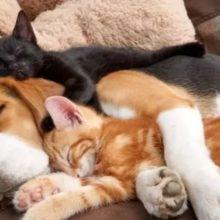 17 Fotos de cães e gatos se abraçando para encher seu coração de amor