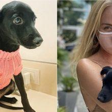 Apresentadora Angélica anuncia adoção de um cão vira-lata