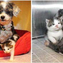Cachorrinha salva e amamenta gatinho órfão como seu próprio cachorrinho