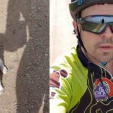 Cachorrinho abandonado na estrada encontra seu herói no meio do nada