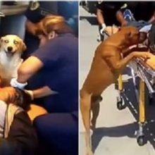 Cães se recusaram a deixar tutor quando ele estava sendo levado para o hospital