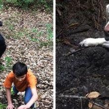 Cão cego perdido na floresta por 1 semana é resgatado por um bombeiro