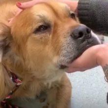 Cão idoso de um abrigo põe a pata na mulher e a deixa saber que está na hora de adotá-lo