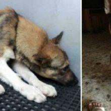 Cão maltratado que costumava pensar que não merecia viver, supera com determinação e se tornar um cão feliz