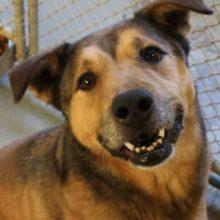 Cão não consegue acreditar que finalmente encontrou um lar após 2.381 dias no abrigo
