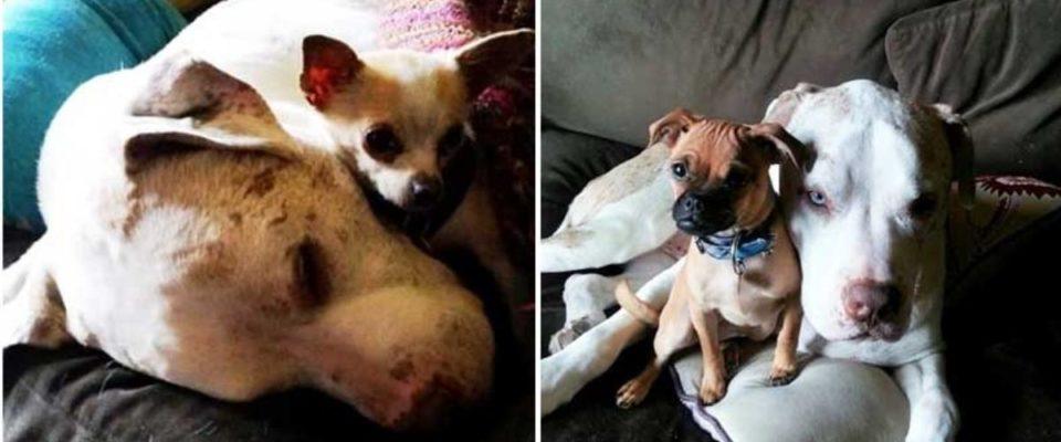 Cão que foi abandonado dá uma mão para outros cães abandonados assustados no abrigo
