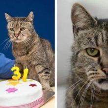 Conheça o gato mais velho do mundo, que tem 31 anos e ainda tem muitas vidas restantes
