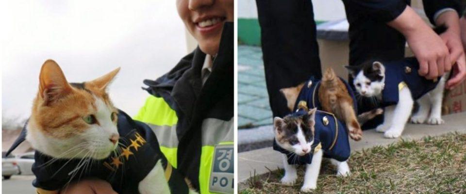 Gata grávida vai em uma delegacia de polícia para ter seus gatinhos e se tornou parte da polícia