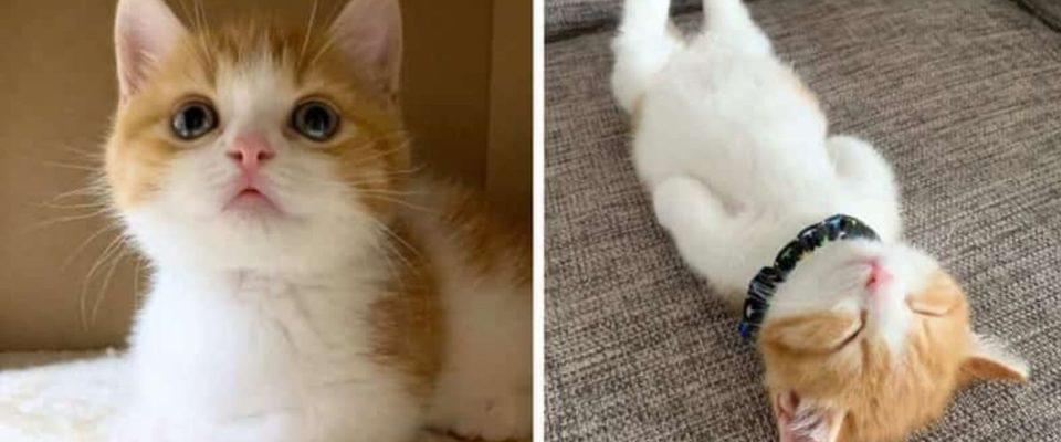 Gatinho está se fazendo sucesso nas rede sociais por causa de sua adorável maneira de dormir