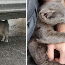 Gatinho perdido segue um estranho no estacionamento e implora para ser adotado
