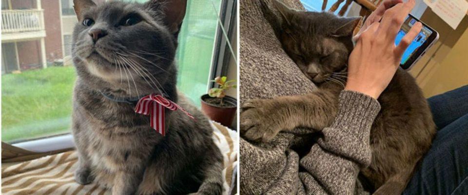 Gato de rua queria viver com humanos, então ele se convidou para sua família e se recusou a sair