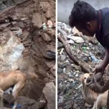 Mãe Canina Levou Resgatador Para Ajudar a Salvar Seu Filhote Enterrado