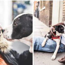 Morador de rua divide quarto minúsculo com um cachorro que adotou das ruas