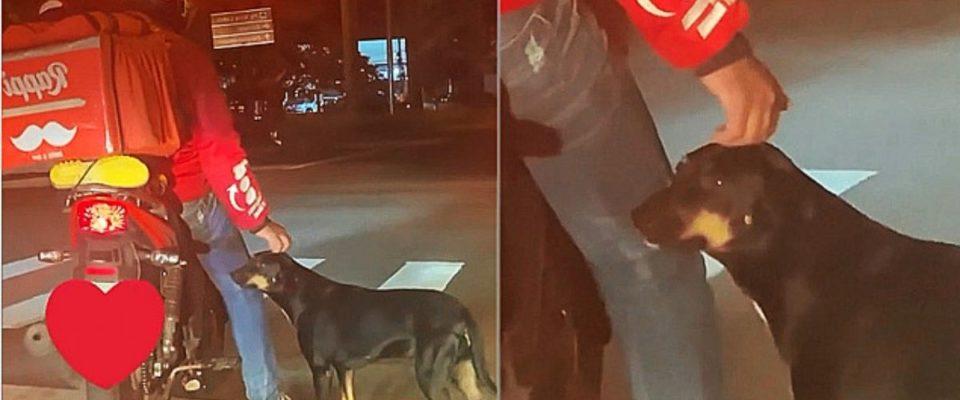 Motoboy faz carinho em cão enquanto espera semáforo e faz sucesso na internet