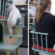 Mulher inventa cadeira que permite que animais carentes se sentem com seus tutores