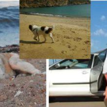 Mulher resgata um cachorro perdido solitário que ela encontrou em uma praia