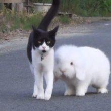 O Coelhinho Fofo e um Adorável Gato passeiam juntos todos os dias