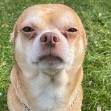 Prancer, o cão taxado como uma criança assombrada no corpo de um cão é adotado