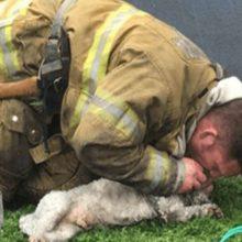 Bombeiro se recusa a desistir do cachorro que resgatou da casa incendiada