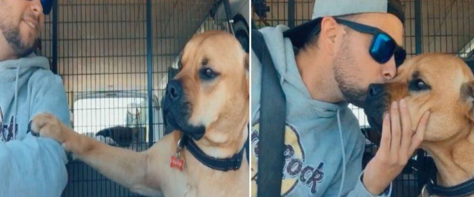 Cachorro resgatado se recusa a largar a mão do seu pai humano
