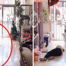 Cachorro salva balconista de pet shop que desmaiou no trabalho