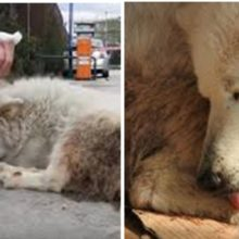 Cão de rua gentil que foi esquecido por anos, encontra um lar feliz