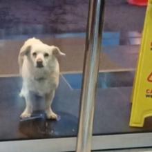 Cão fiel ao seu tutor fica do lado de fora do hospital esperando ele, sem sabe que ele faleceu