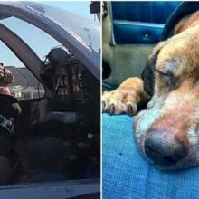 Cão só tem semanas de vida, piloto voa 640 km para ter certeza de que seus últimos dias serão cheios de amor