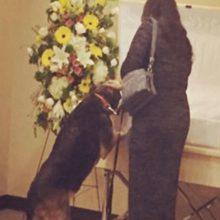 Funerária permite a visita do cachorro para que ele possa dizer um último adeus