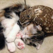 Gatinho e corujinha tornam-se melhores amigos e até tiram soneca juntos