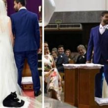 Gato roubou a cena no casamento ao pular no vestido de noiva para tirar uma soneca aconchegante