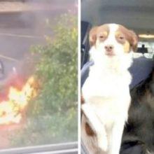 Homem arrisca a vida para salvar três cães indefesos do carro em chamas