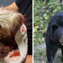 Homem resgata seu cachorrinho do ataque do urso preto bem na hora