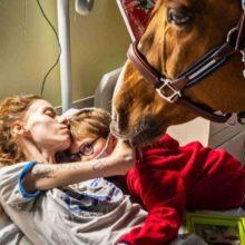 Momento em que um cavalo alivia a dor de uma mãe doente agarrada ao filho