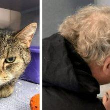 Mulher vê seu gato no Facebook, desaparecido há 2 anos