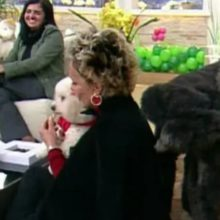 O dia que um cachorro fez xixi na Ana Maria Braga ao vivo