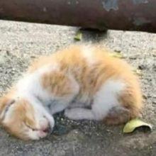 Pequeno gatinho não mostra sinais de vida até que é resgatado e tudo muda