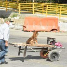 Vovô leva seu cachorro em um carrinho de mão para acompanhá-lo ao trabalho